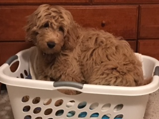 Puppy problems return to our home