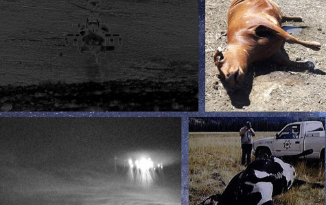 Cattle mutilations – not of this planet