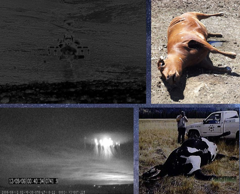 Mutilated+cattle+in+Colorado+-+ranging+from+1972+to+2008.+Remains+unexplained.
