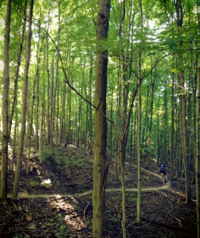 A cathedral of trees on Mitchell Memorial Forest's mountain bike trail