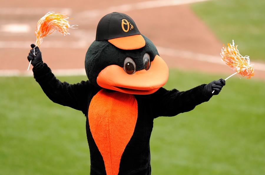 Oriole Bird of the Baltimore Orioles