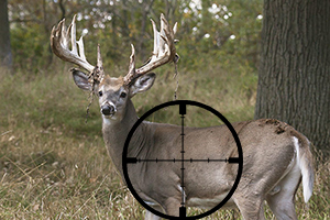 BTV kills deer population