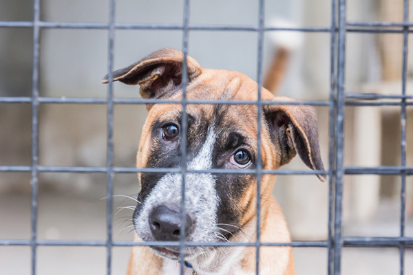 A sad scared dog behind bars in a shelter