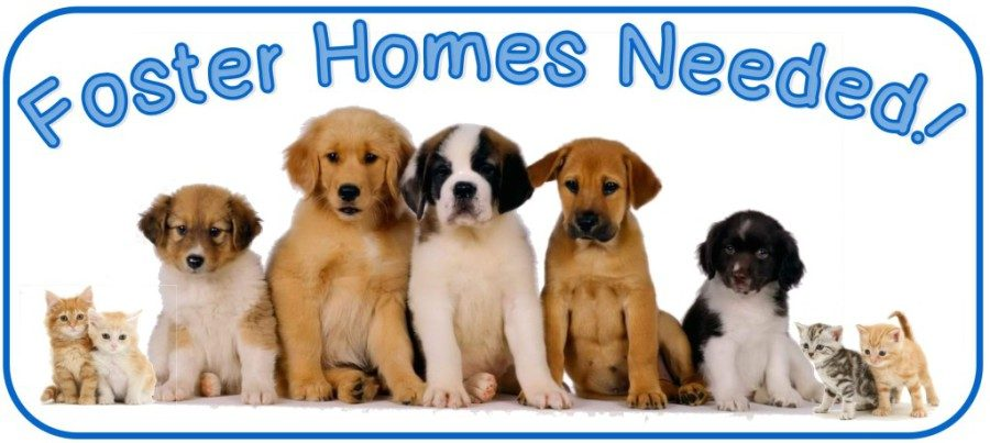Millions+of+animals+in+the+US+are+in+need+of+a+home%2C+if+you+can%27t+adopt%2C+foster.