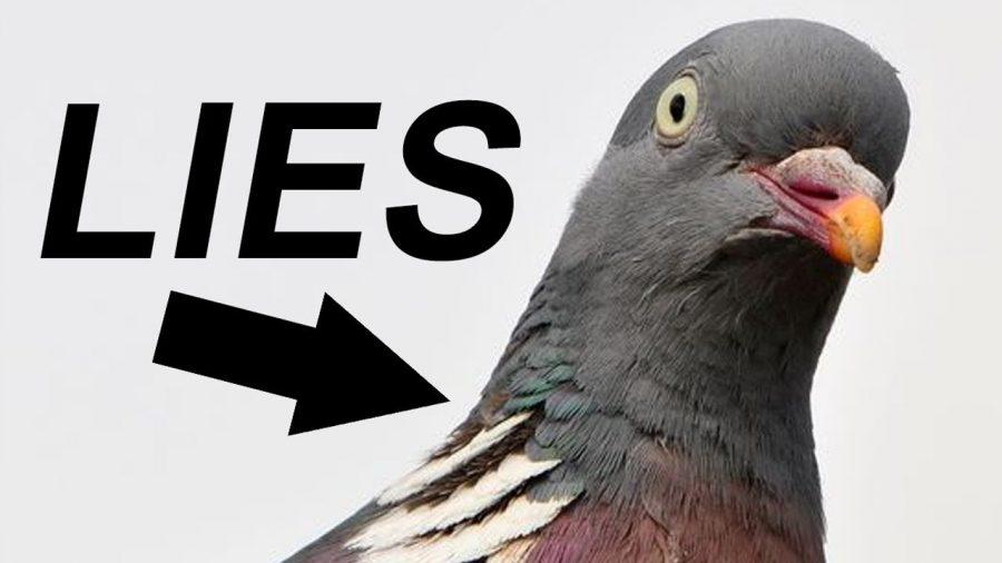 Bogus Birds