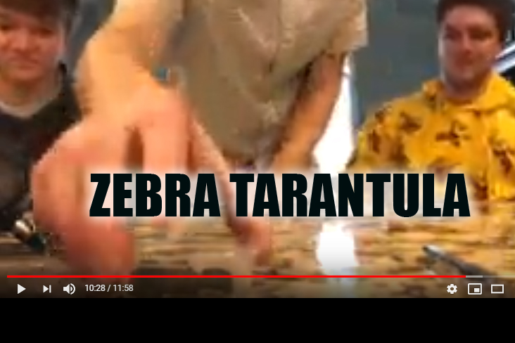 Nick Hunter reaches for his tasty zebra tarantula. Just moments later it's a screaming mad dash to the bathroom. Enjoy.