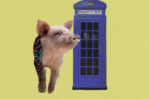 Are cyborg pigs the tech from the future or just a fad?