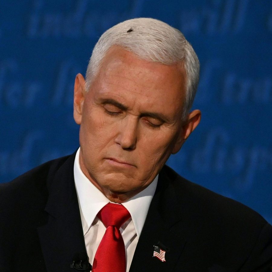 After last year's vice presidential debate, the fly on Mike Pence's head was reported on more than the debate itself.